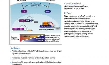 Carlsson C56 Awesome Signal Integration by the Iκb Protein Pickle Shapes