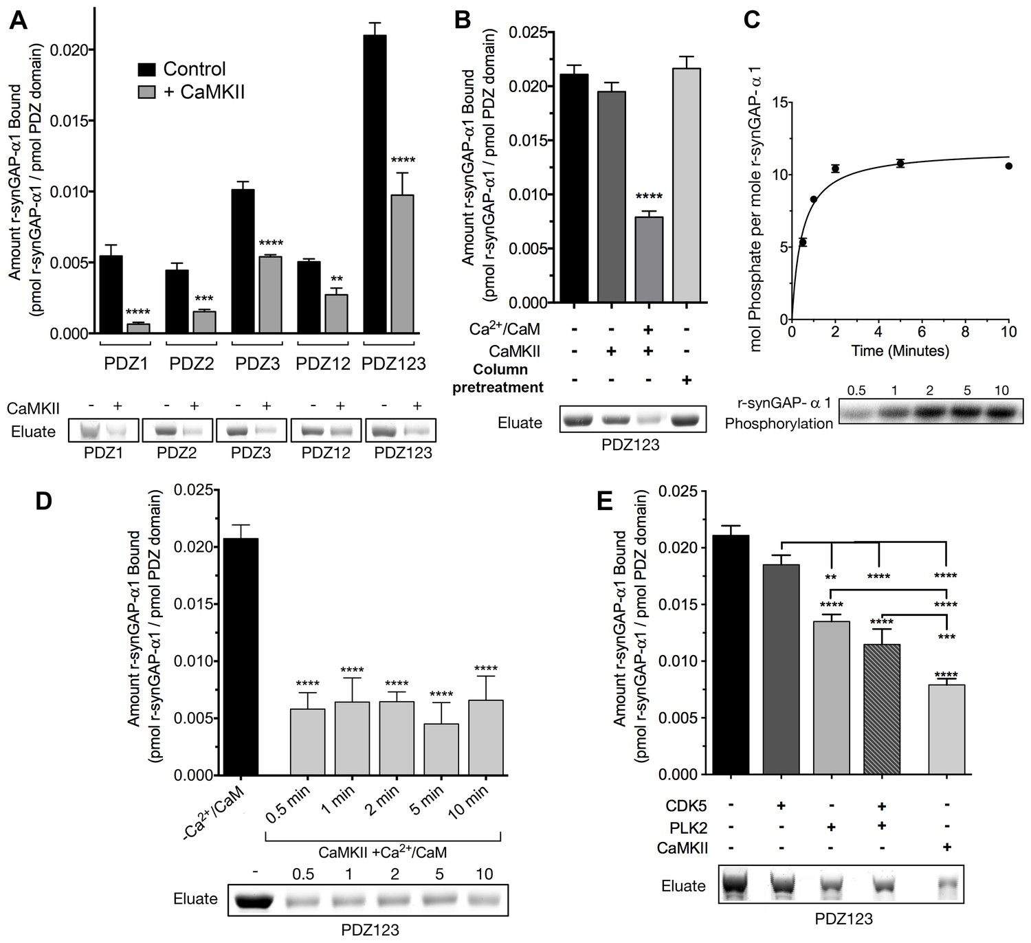 Suzuki Wilmington Nc Luxury A Model for Regulation by Syngap α1 Of Binding Of Synaptic
